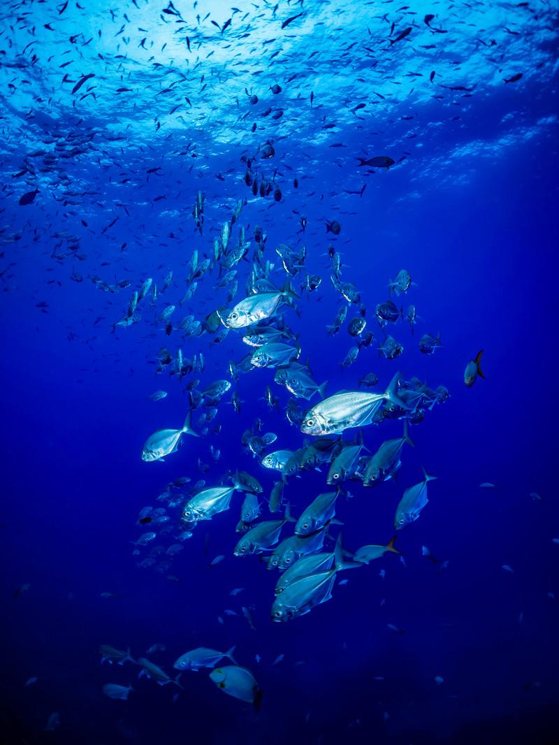 魚由来コラーゲン
